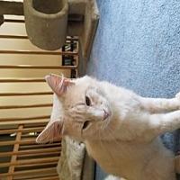 Adopt A Pet :: Henry Jacob - Flint HIll, VA