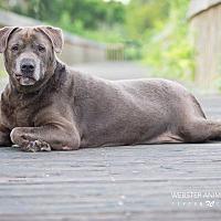 Adopt A Pet :: Chloe - Webster, TX