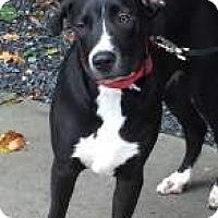 Adopt A Pet :: Benny - Rexford, NY