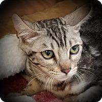 Adopt A Pet :: Layla - Sheboygan, WI