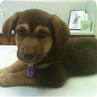 Adopt A Pet :: Harley - Arlington, TX
