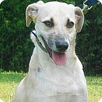 Adopt A Pet :: Milo - Berkeley, CA
