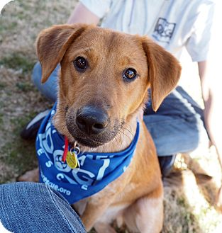 Australian Cattle Dog/Terrier (Unknown Type, Medium) Mix Dog for adoption in Cross Roads, Texas - Rascal