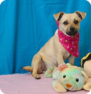 Terrier (Unknown Type, Small) Mix Dog for adoption in Poteau, Oklahoma - IZZY