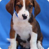 Adopt A Pet :: Kayle - Waldorf, MD
