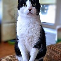 Adopt A Pet :: Biscuit - Sarasota, FL