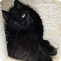 Adopt A Pet :: Bing - Cloquet, MN