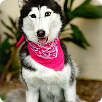 Adopt A Pet :: Dee Dee - Los Angeles, CA