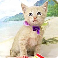 Adopt A Pet :: Doc - Harrisonburg, VA