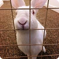 Adopt A Pet :: Violet - Edinburg, PA