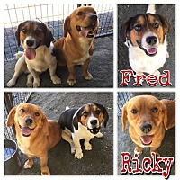 Adopt A Pet :: Ricky and Fred - Waxhaw, NC