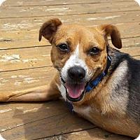 Adopt A Pet :: Bubbles - Atlanta, GA