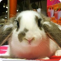 Adopt A Pet :: Pauline - Los Angeles, CA