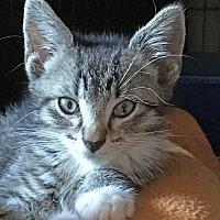 Adopt A Pet :: Bo - East Brunswick, NJ