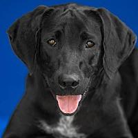 Adopt A Pet :: Kota D3801 - Shakopee, MN