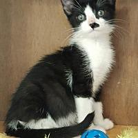 Adopt A Pet :: Robbie - Germantown, MD