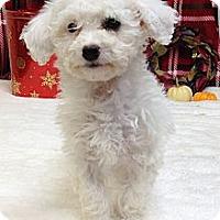 Adopt A Pet :: Bell - Auburn, CA