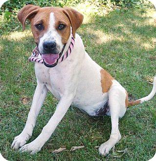 Hound (Unknown Type) Mix Dog for adoption in Red Bluff, California - MOWGLI