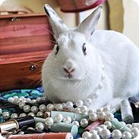 Adopt A Pet :: Tiffany - Williston, FL