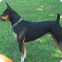 Adopt A Pet :: Raven - Oklahoma City, OK
