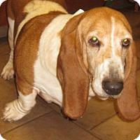 Adopt A Pet :: Destiny - Barrington, IL