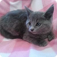 Adopt A Pet :: Heather - Port Republic, MD