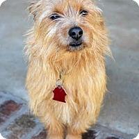 Adopt A Pet :: *Diego aka Bennie - PENDING - Westport, CT