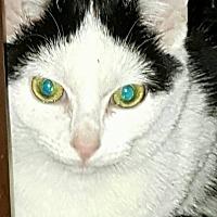 Adopt A Pet :: Marie - Albemarle, NC