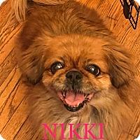 Adopt A Pet :: NIKKI - SO CALIF, CA