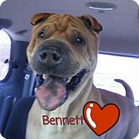Adopt A Pet :: Bennett - Houston, TX