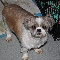Adopt A Pet :: Owen - Homer, NY