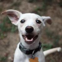 Adopt A Pet :: Gidget - DeSoto, IA