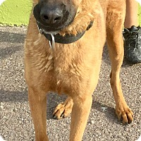 Adopt A Pet :: Wolfgang - Phoenix, AZ