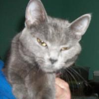 Adopt A Pet :: Sasha - Clinton, MO