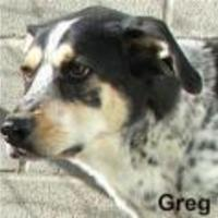 Adopt A Pet :: Greg - Tahlequah, OK