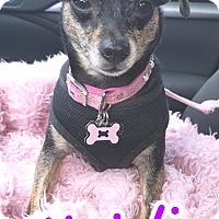 Adopt A Pet :: Heidi - Wellington, FL