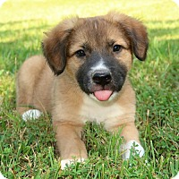 Adopt A Pet :: Trooper - York, PA