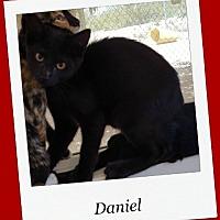 Adopt A Pet :: Daniel - Tombstone, AZ