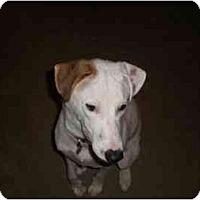 Adopt A Pet :: Junior - League City, TX
