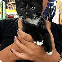Adopt A Pet :: Esmeralda - Ft. Lauderdale, FL