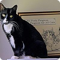 Adopt A Pet :: Polly - Victor, NY