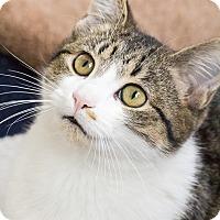 Adopt A Pet :: Patricia - Chicago, IL