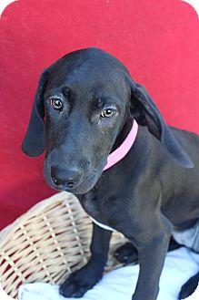 Pointer Mix Dog for adoption in Waldorf, Maryland - Abuela