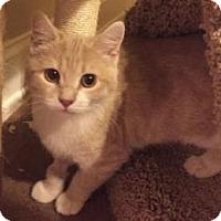 Adopt A Pet :: Mini - Merrifield, VA
