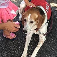 Adopt A Pet :: Reba - Virginia Beach, VA