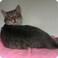 Adopt A Pet :: Sterling - Powell, OH
