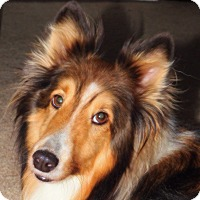 Adopt A Pet :: Dylan - Powell, OH