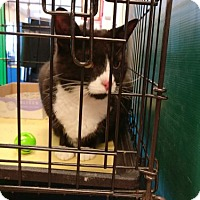 Adopt A Pet :: Sully - Avon, OH