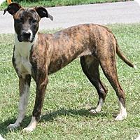 Adopt A Pet :: Squiggles 27056 - Prattville, AL