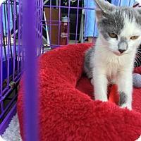 Adopt A Pet :: Aladdin - Wilmore, KY